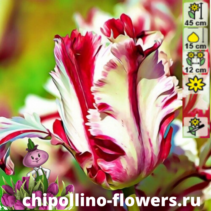 Тюльпан Estella rijnveld ( 5 луковиц)